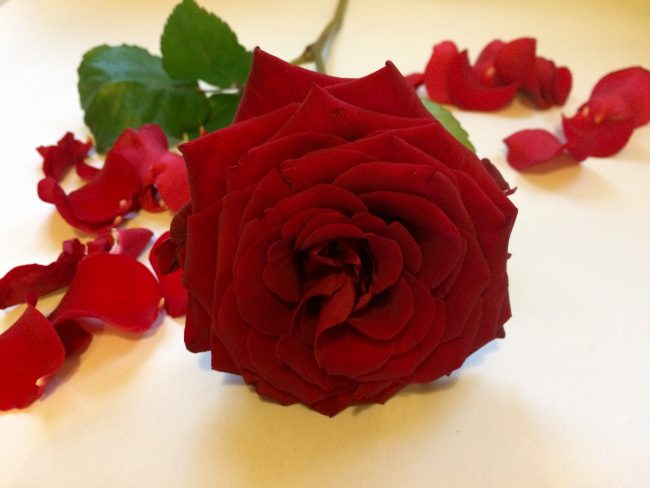 Express love with romantic flowers - Express love with romantic flowers